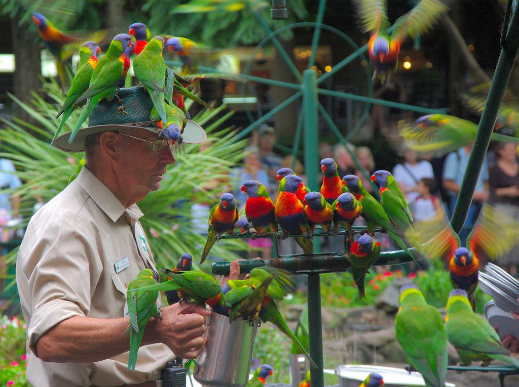 Currumbin Wildlife Sanctuary General - Admission
