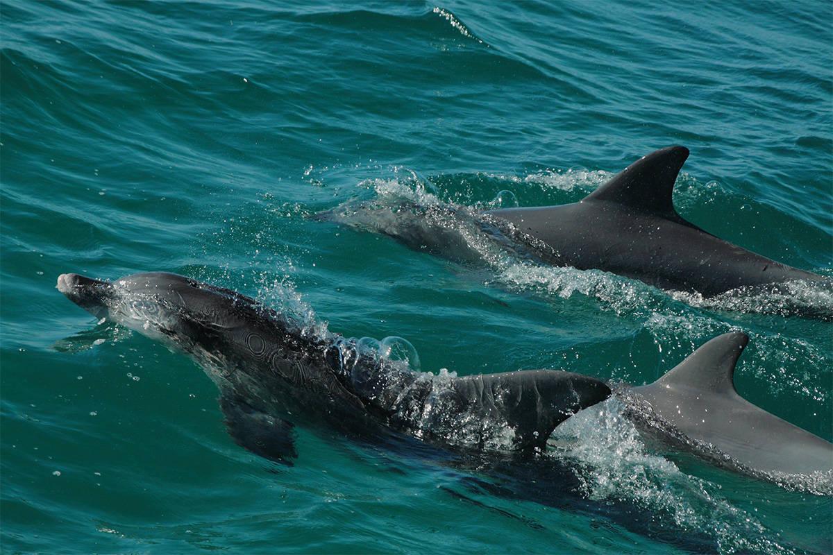 Jervis Bay - Dolphin Watch Cruise - Tekkin III