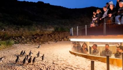 7D6N December Series-Penguin parade std viewing